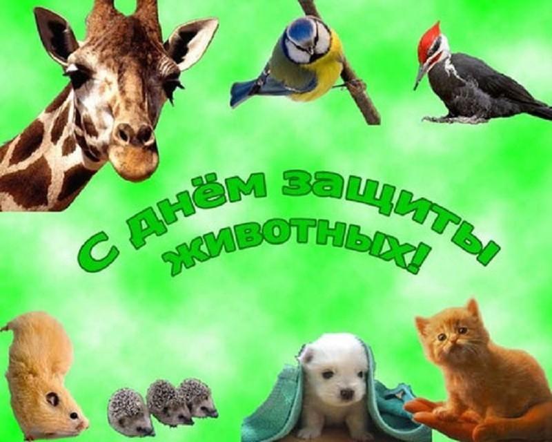 Картинка с днем защиты животных